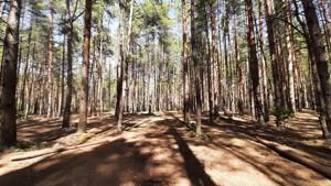 Земельный участок Набережая, Лебедевка (Вышгородский), E-41303 - Фото3