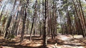 Земельный участок Набережая, Лебедевка (Вышгородский), E-41307 - Фото2