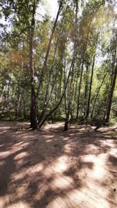 Земельный участок Набережая, Лебедевка (Вышгородский), E-41310 - Фото 10