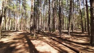 Земельный участок Набережая, Лебедевка (Вышгородский), E-41310 - Фото 14