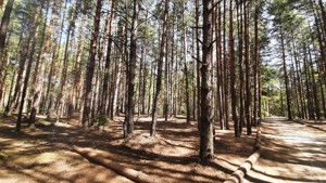 Земельный участок Набережая, Лебедевка (Вышгородский), E-41310 - Фото 15