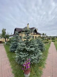 Будинок Шевченка, Лебедівка (Вишгородський), C-109938 - Фото 70