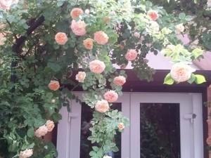 Будинок Русанівські сади, Київ, Z-633825 - Фото 3