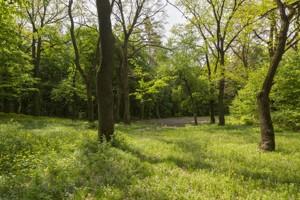 Дом Лесная, Лесники (Киево-Святошинский), K-5626 - Фото 12