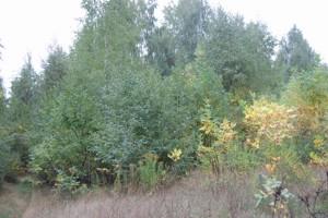Земельный участок Крушинка, X-24995 - Фото2