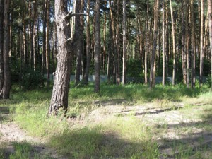 Земельна ділянка Українка, I-24497 - Фото
