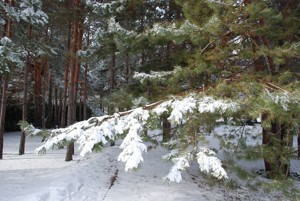 Дом Хотяновка, M-26423 - Фото 15