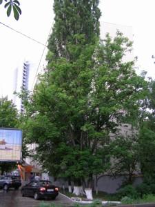 Квартира Лесі Українки бул., 3, Київ, E-29804 - Фото 11